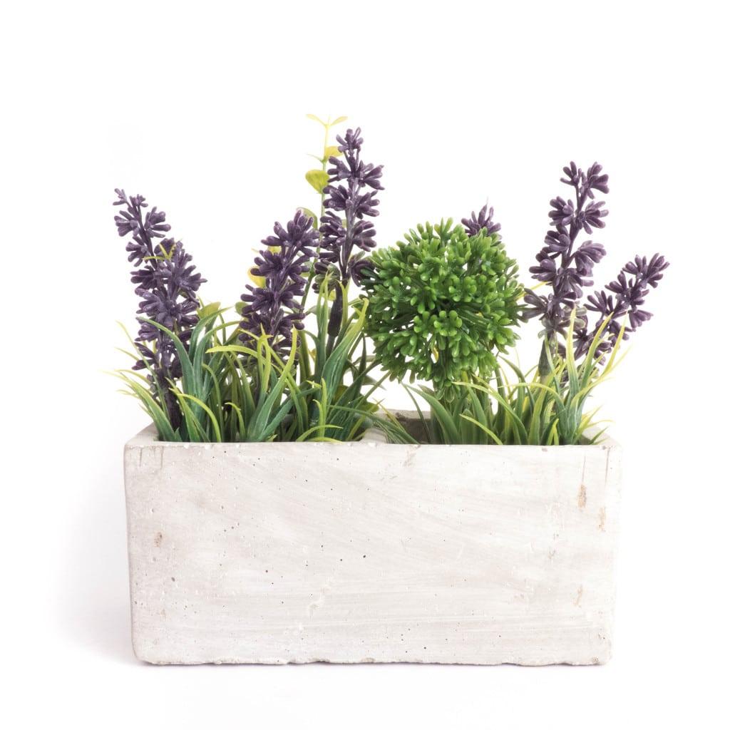 lemonbe-Decora tu jardin con flores que resisten el calor y la lluvia-02