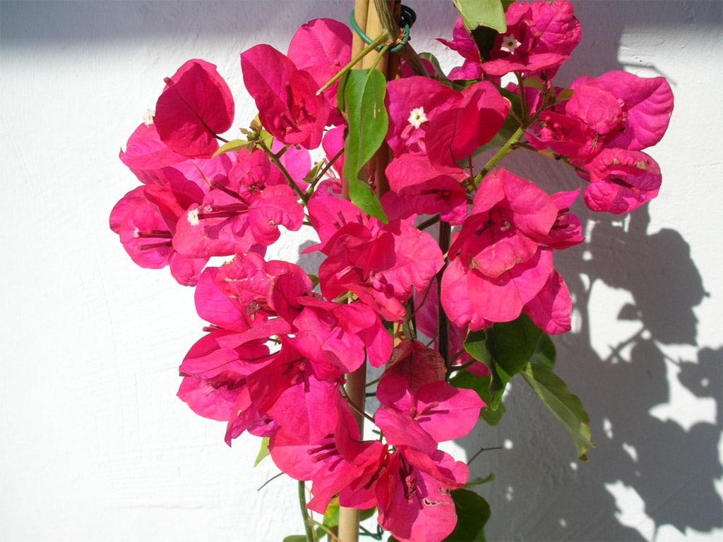 lemonbe-Decora tu jardin con flores que resisten el calor y la lluvia-06