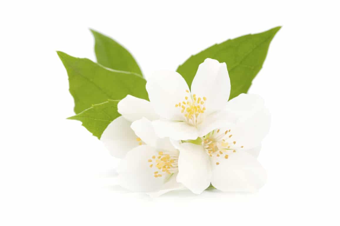 lemonbe-Decora tu jardin con flores que resisten el calor y la lluvia-07