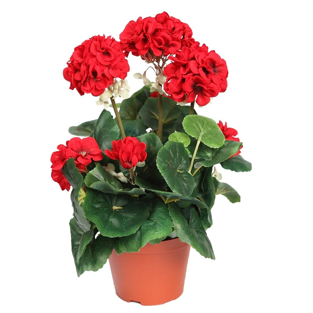 lemonbe-Decora tu jardin con flores que resisten el calor y la lluvia-03