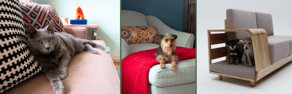 LEMONBE_Cómo tener una casa Pet Friendly_01