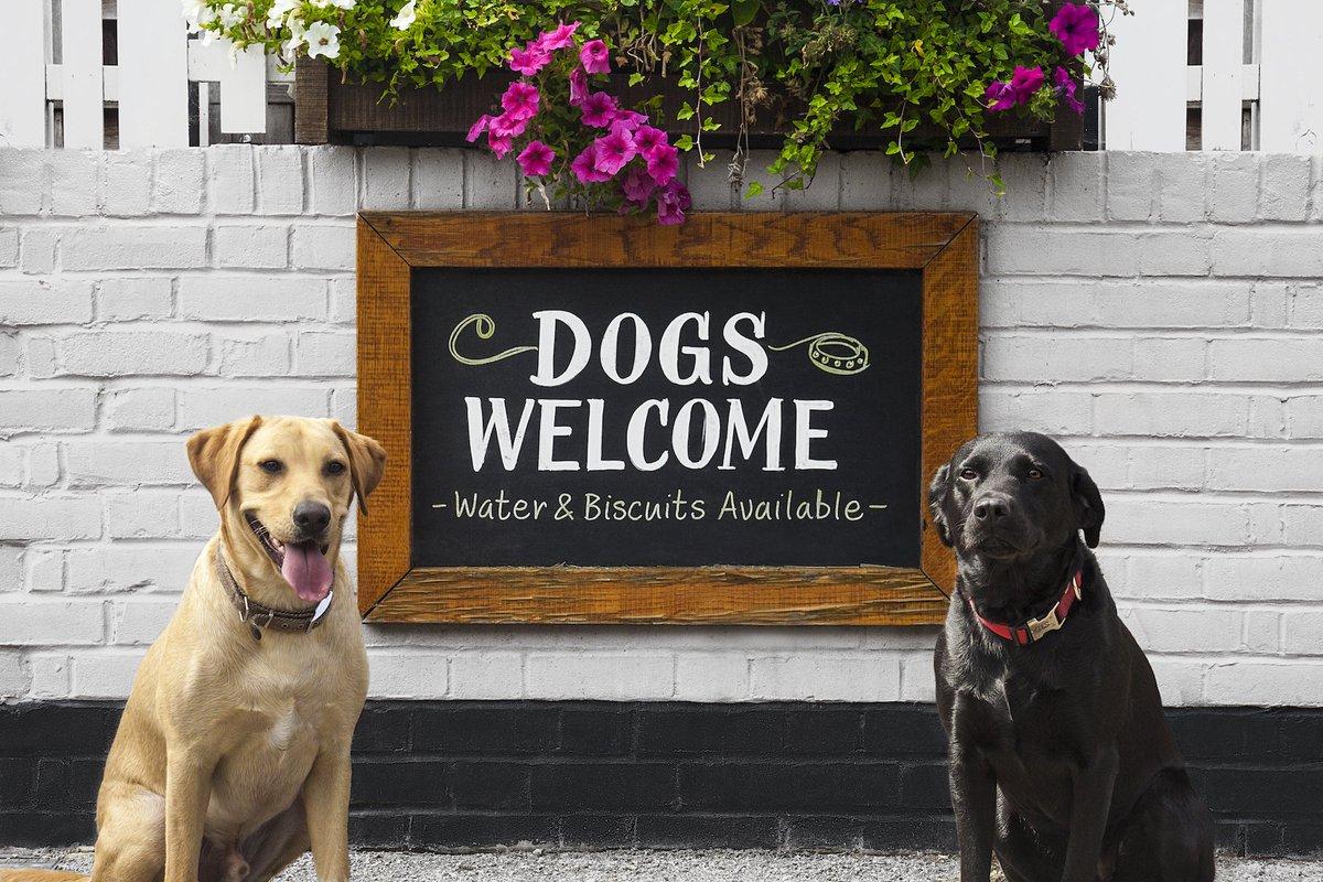 CDMX es la ciudad más pet friendly de Latinoamérica